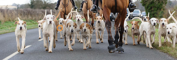 The Cottesmore Hounds - The Cottesmore Hunt at Ashwell Grange 9/12