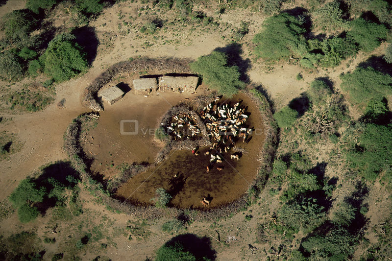 Aerial view of Masai camp with huts and cattle within coral area, Crater Highlands, Ngorongoro Conservation Area, Tanzania