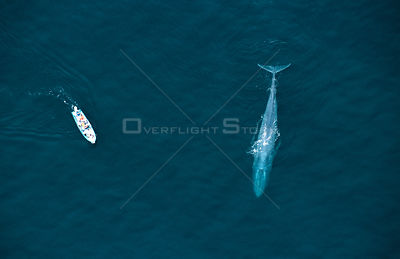 Aerial view of whale watching boat and Blue whale, Sea of Cortez, Mexico