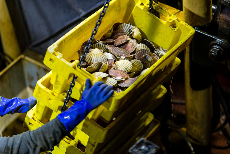Scallops are England's most valuable fish species with £35 million worth caught in 2017. But scallop stocks - like roughly one third of our coastal species – are data deficient. There isn't sufficient information on the stock status and impact of fishing for the species to be considered sustainable.