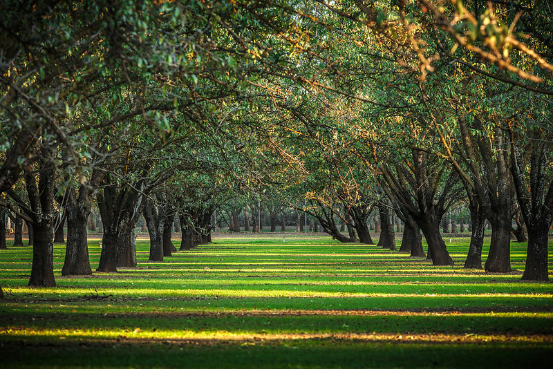 Owen_Roth-November_07_2015-Almond_Orchard-6618-HDR-00023