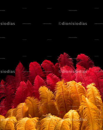 Luxury yellow and red feathers of carnivals fancy