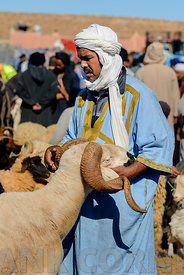 GUELMIM, MOROCCO – OCTOBER 31, 2015: Man with a sheep for sale at the weekly market in the south Moroccan town of Guelmim.
