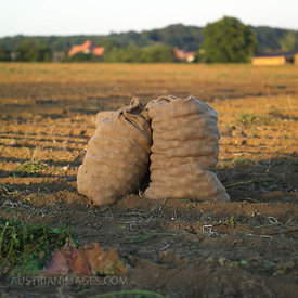 Germany, Hessen, Sack of potatoes in rural field
