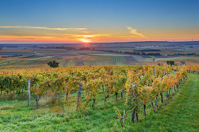 Austria, Burgenland, Oberpullendorf District, near Neckenmarkt, vineyards at sunrise in autumn, View over Deutschkreutz, Blau...