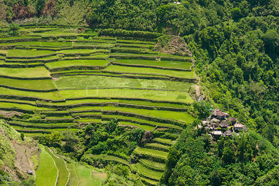 Aerial view of village and rice (Oryza sp) paddy fields growing on the Banaue Rice Terraces, Philippines.  UNESCO World Herit...