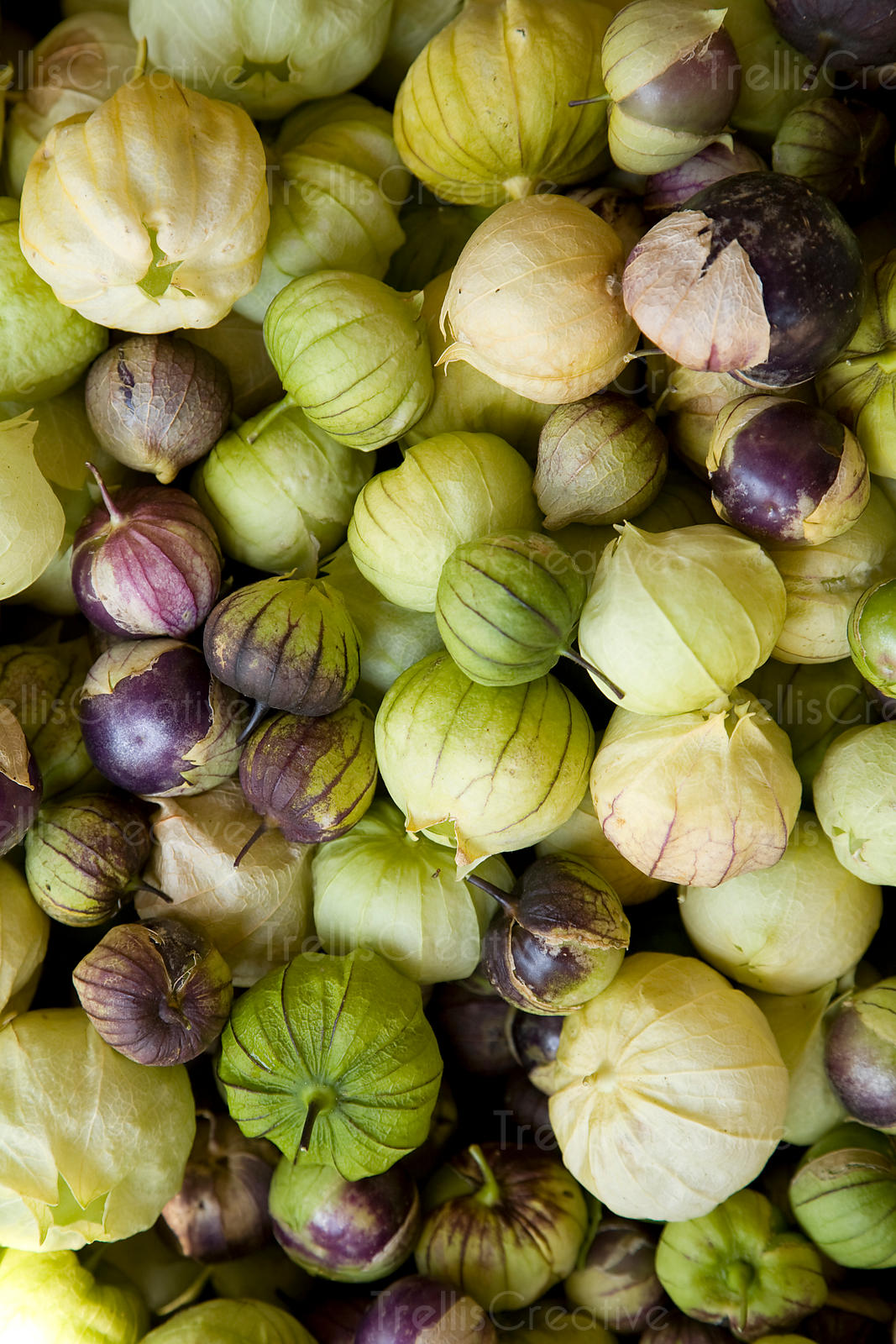 Green and purple tomatillos