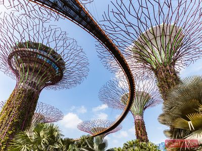 Low angle view of supertrees, Gardens by the Bay, Singapore