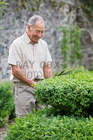 Ian McKellar clipping hedge. Parkhead, Roseneath, Helensburgh, Dumbartonshire, Scotland, UK