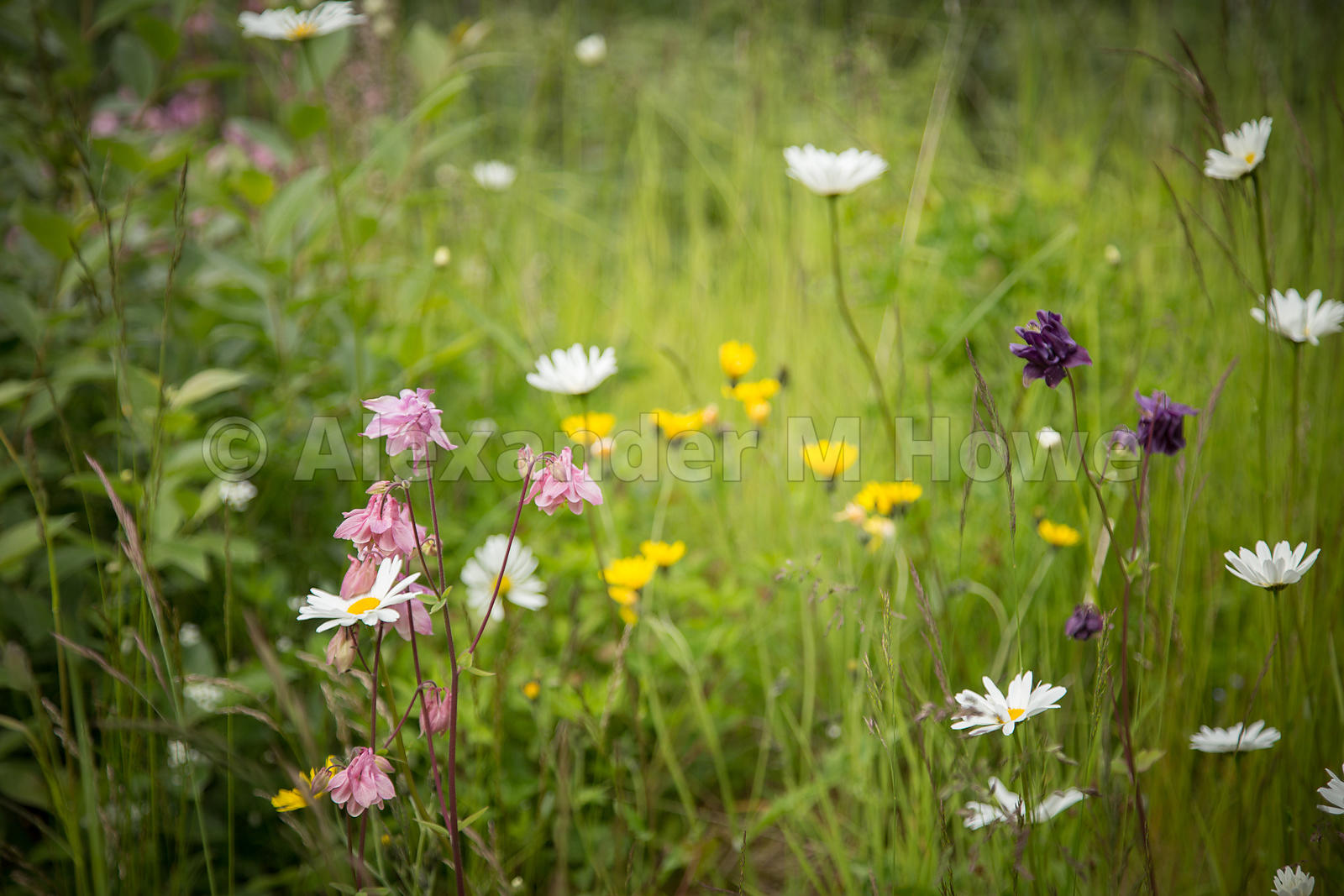 Beautiful WIld Flowers in Grassland