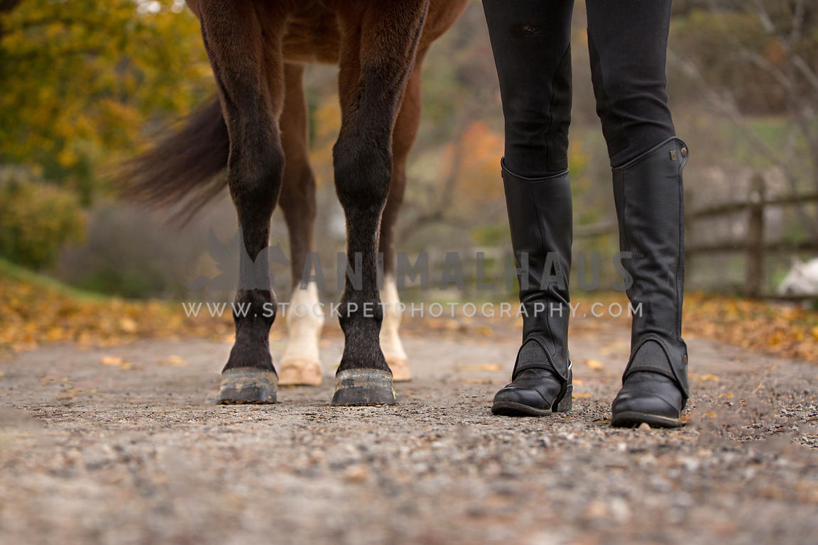 woman's feet next to horse's feet
