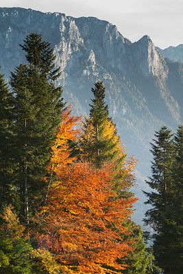 Austria, Tyrol, Inn valley, Sunset, autumn trees