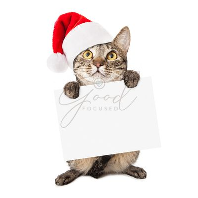 Cat Wearing Santa Hat Carrying Blank Sign