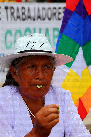 Woman chewing coca leaves ( Erythroxylum coca ) at an event promoting traditional uses of the coca leaf , La Paz , Bolivia
