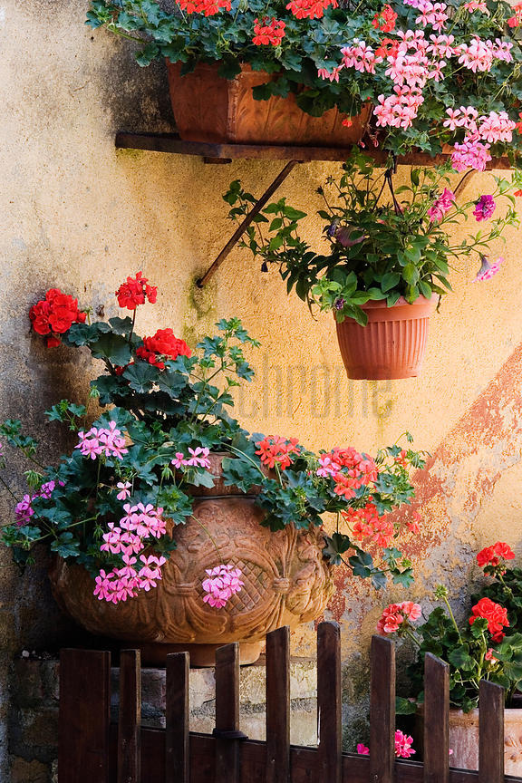 Italy, Tuscany, La Foce, potted plants