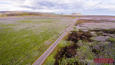 Aerial drone view of Ring Road through green plains, Iceland