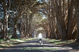 Cypress Tree Tunnel Merlin
