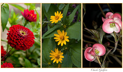 Lightroom_(070715_Zinnias21.CR2_and_2_others)