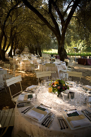 Tables are set beneath old olive grove