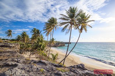 Palm fringed Bottom bay beach and caribbean sea, Barbados