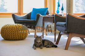 cat lounging on the floor with mid century modern furniture
