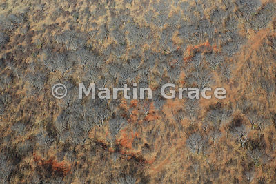 Scrub vegetation by Victoria Falls, Zimbabwe, photographed from the air