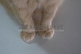 orange cat's front paws