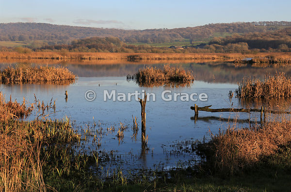Leighton Moss nature reserve (RSPB) in the late afternoon sun, Lancashire, England