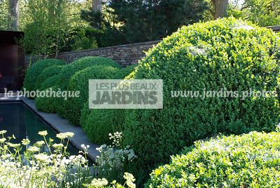 Ball shaped, Buxus, Contemporary garden, Sphere shaped, Topiary, Common Box,