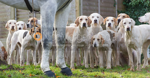 Hounds look adoringly at their Huntsman