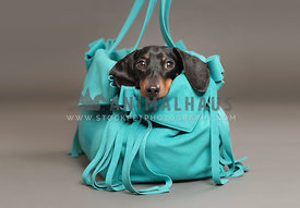 dog in blue carrier