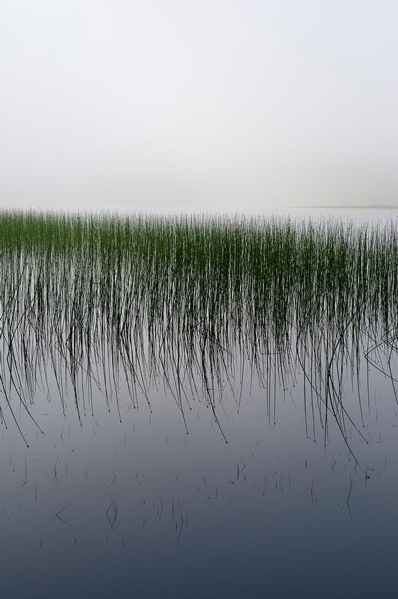 Reeds in the mist, Loch Awe