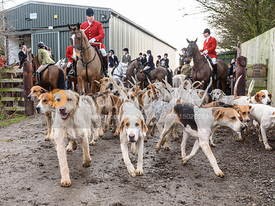 Huntsman and hounds leaving the meet. The Cottesmore Hunt at Launde Park Farm