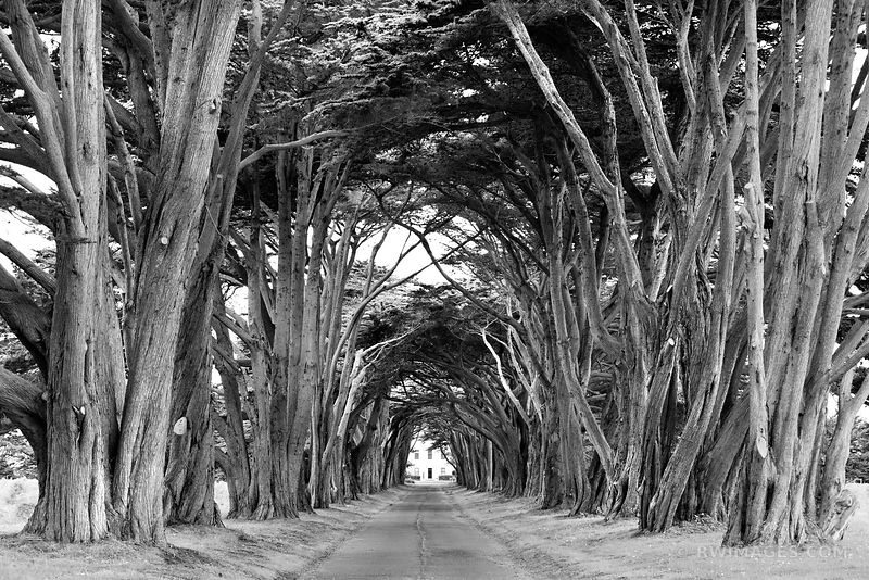 CYPRESS TREE TUNNEL POINT REYES NATIONAL SEASHORE CALIFORNIA BLACK AND WHITE
