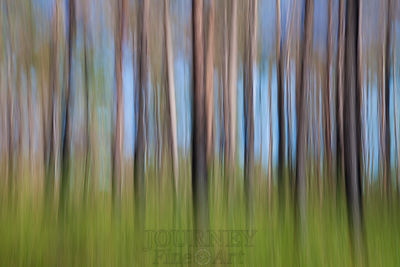 Sapelo Island Trees Abstract 4