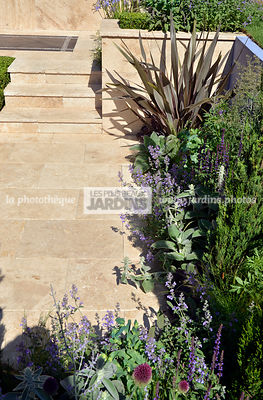 Massif en bordure de dallage : Phormium et Nepeta. Paysagiste : Raine Clare-Wills, Hampton Court, Angleterre