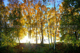 Sunlight Bursting Through The Autumn Trees