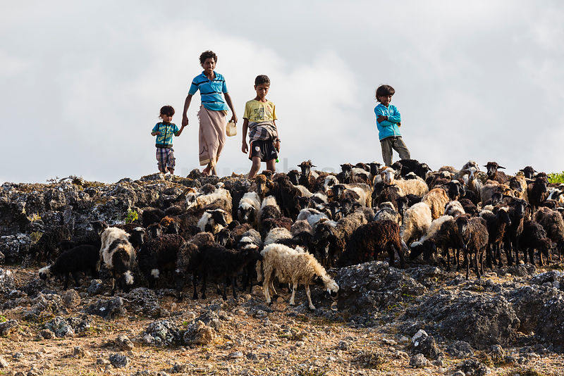 Bedhouin Children herding Sheep