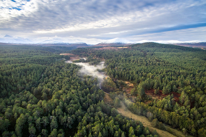 Aerial view of Abernethy Forest with Cairngorm mountain range in background, Cairngorms National Park, Scotland, UK, November...