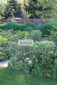 Ball shaped, Buxus, Perennial, Sphere shaped, Topiary, Common Box,