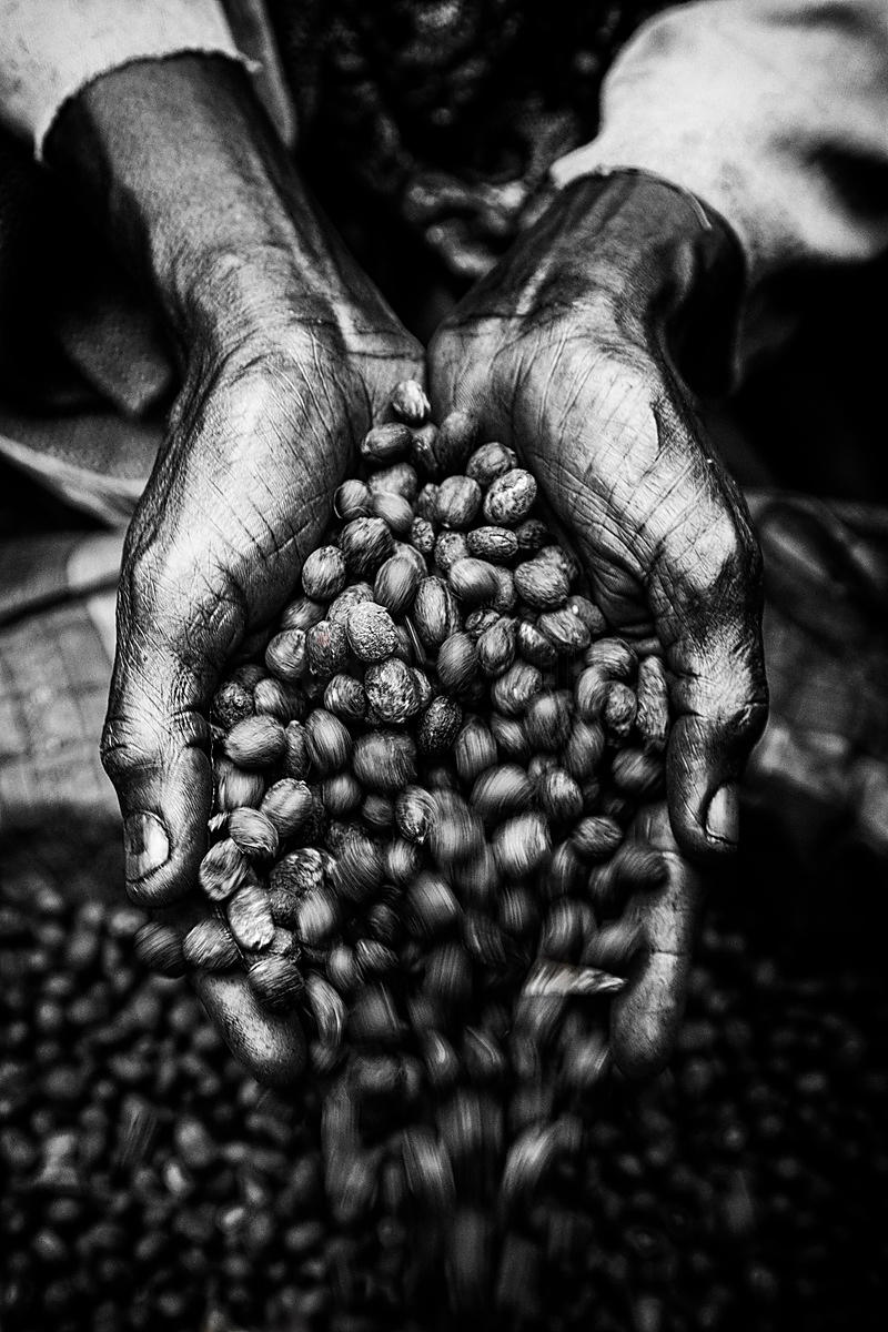 Woman Pouring Coffee Beans from Cupped Hands