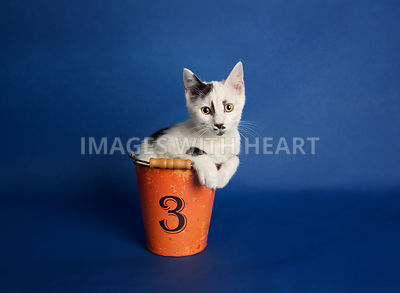 Black and white kitten with mustache in orange metal pail