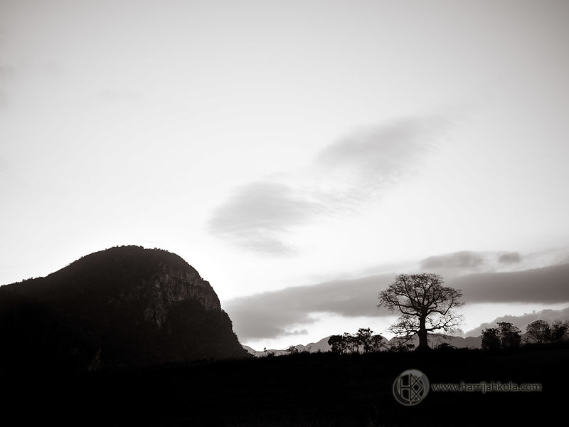 Cuba - Vinales (Tree and Hill Silhouette)