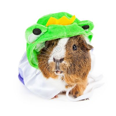 Guinea Pig in Frog Prince Costume