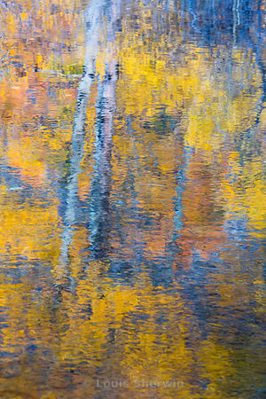 Aspen Reflection in Rush Creek