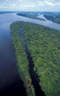 Anavilhanas archipeligo in the Rio Negro, Brazil - permanently flooded forest
