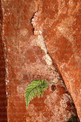 Fern growing in crack in rock in caverns in Ciudad de Itas, Torotoro National Park, Bolivia