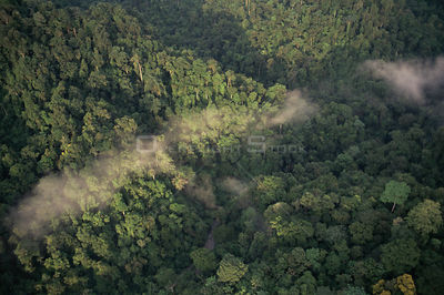 Aerial view of tropical rainforest canopy with mist, Corcovado NP, Costa Rica..Filmed for BBC Planet Earth series.