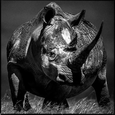 44659-The_helmet_of_the_rhino_Laurent_Baheux
