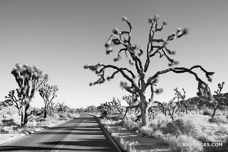 ROAD THROUGH JOSHUA TREE NATIONAL PARK CALIFORNIA BLACK AND WHITE LANDSCAPE